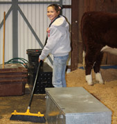 SA Junior Heifer Expo